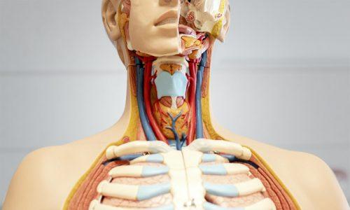 penyebab kanker tiroid, rumah sakit awal bros